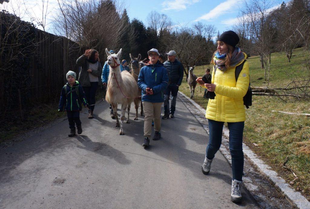 inklusive Gruppe wandert mit Lamas